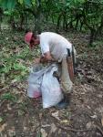 atando los sacos con las semillas para que Azulejo los lleve de vuelta