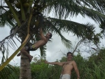 cosechando cocos...