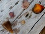 colección de conchas de la playa de Las Lajas