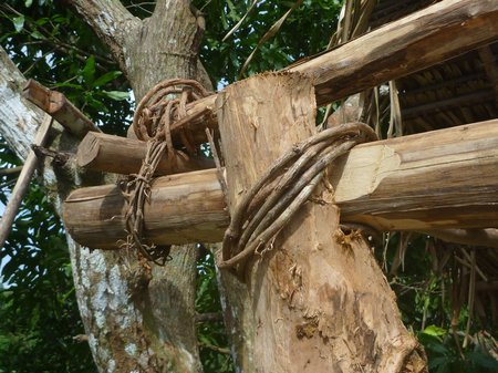 a closeup of the marica vine tying up the main load-bearing joints