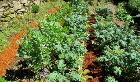 beautiful polycultures at the finca