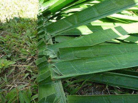 the cut leaves, folded